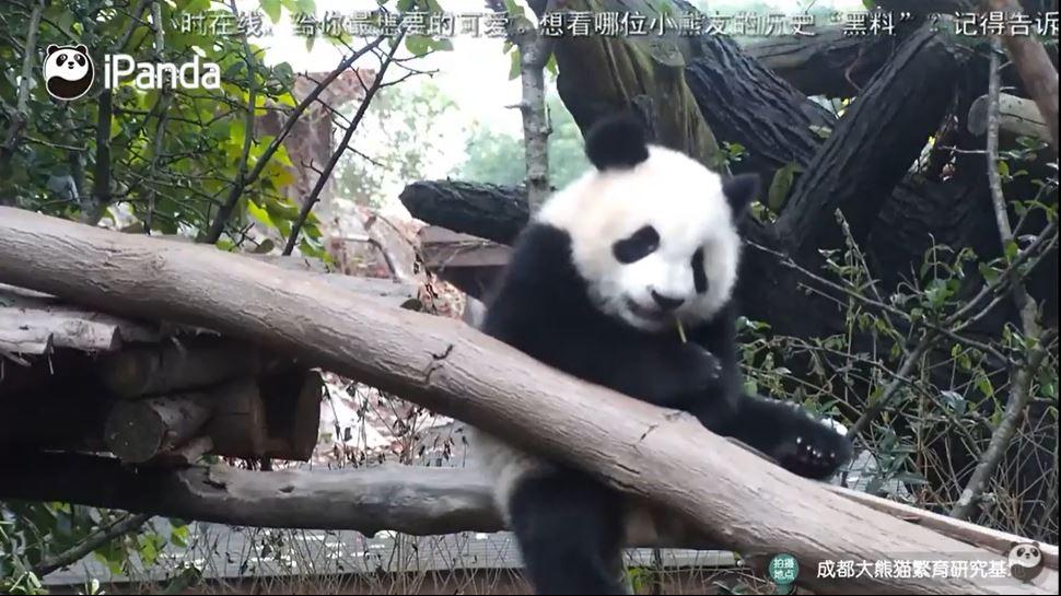 webcam Chengdu