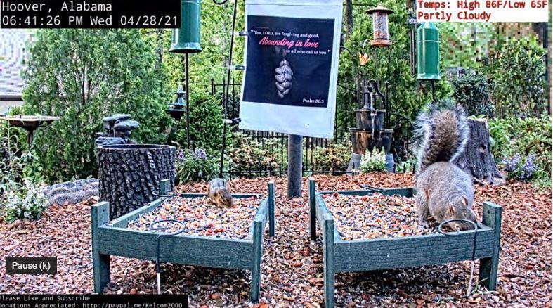 webcam Hoover