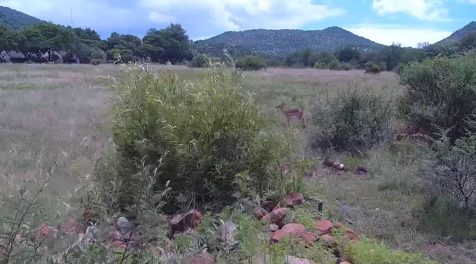webcam Pilanesberg National Park