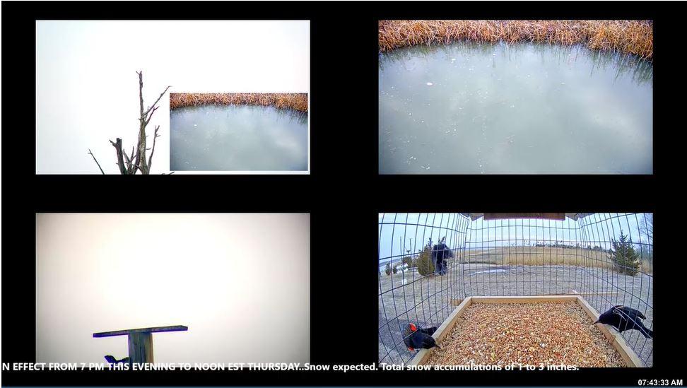 webcam Maurice River