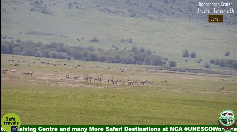 webcam Ngorongoro